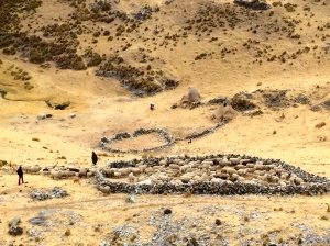 Shepherds herding sheep with help of dogs into rock corral