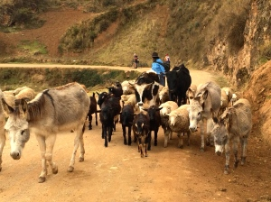 small flock of mixed animals with herders on remote roadway