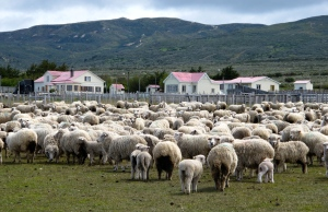 sheep and estancia (ranch) along coast